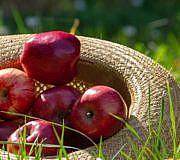 Apfel, Äpfel