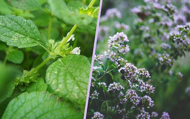 13 Bienenfreundliche Krauter Fur Garten Und Balkon Utopia De