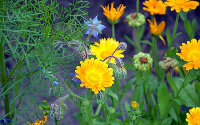 Bienenweide Diese 11 Pflanzen Fur Garten Oder Balkon Helfen Den Bienen