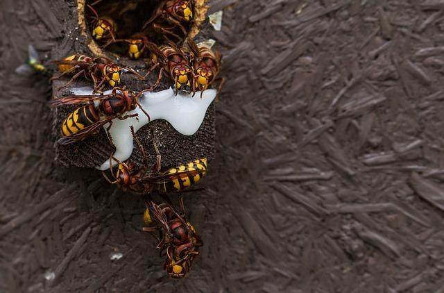 Hornissen stechen nur wenn sie sich bedroht fühlen.