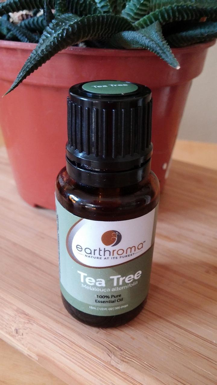 Teebaumöl Milben milben bekämpfen mit diesen hausmitteln klappt s utopia de