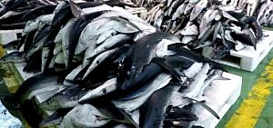 Das Geschäft mit dem Fischsiegel – Die dunkle Seite des MSC