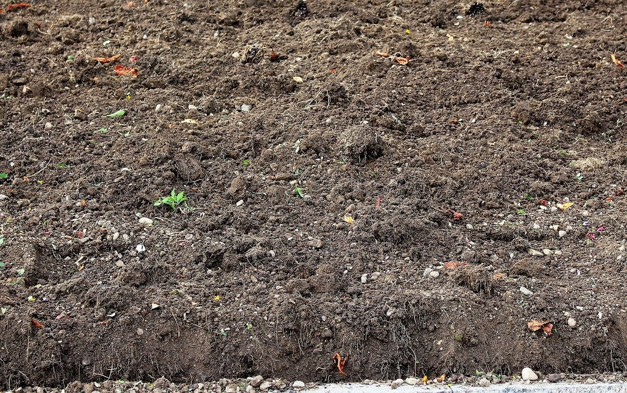 Außergewöhnlich Rasen säen: Anleitung, der richtige Zeitpunkt und wertvolle Tipps @FH_56