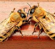 Bienen helfen