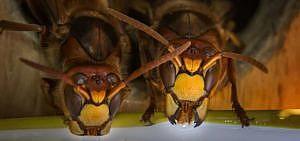 Im Sommer sind Wespen überall.