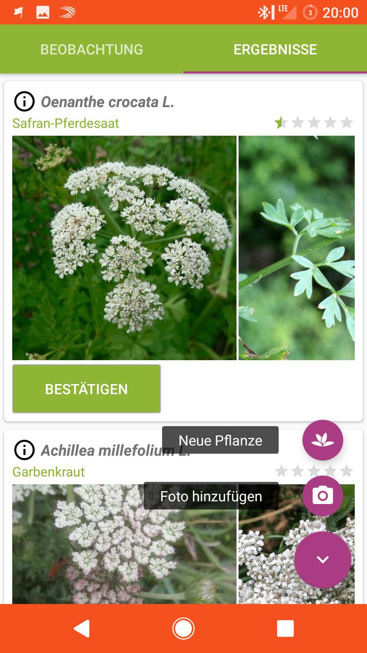 Mit der Pl@ntNet-App Pflanzen bestimmen
