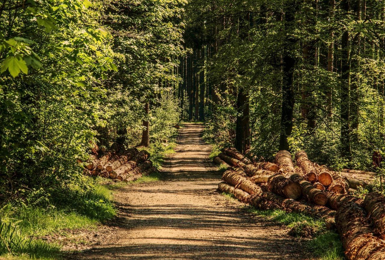 Papier Recycling schont Ressourcen wie Holz