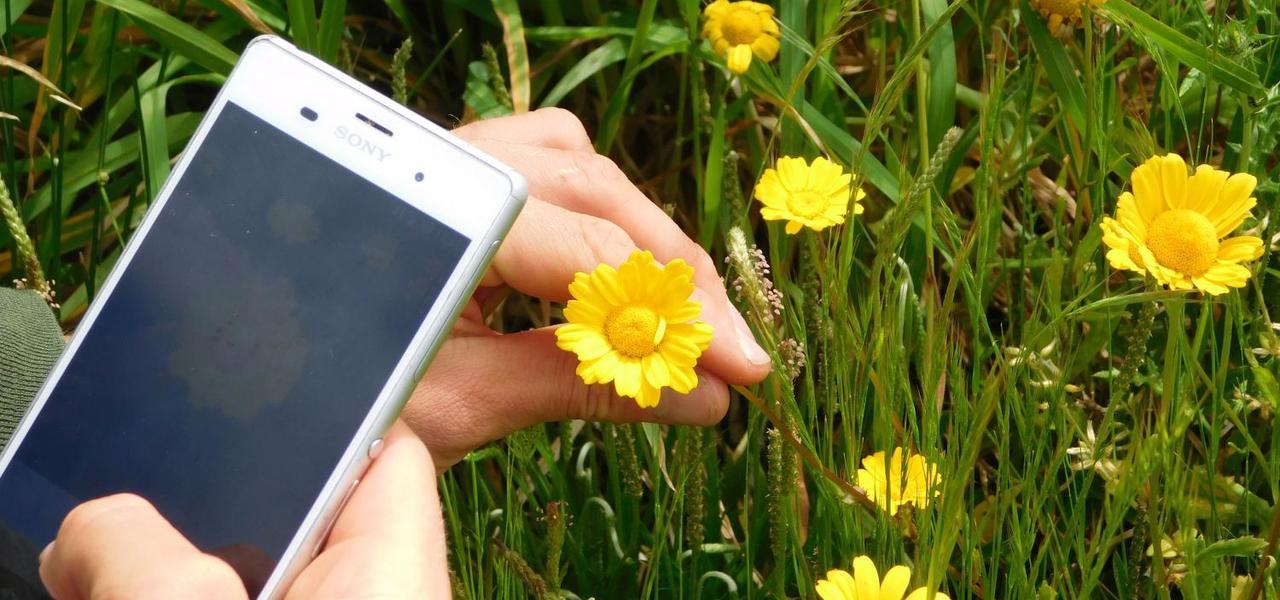 pflanzen per app bestimmen die besten tools