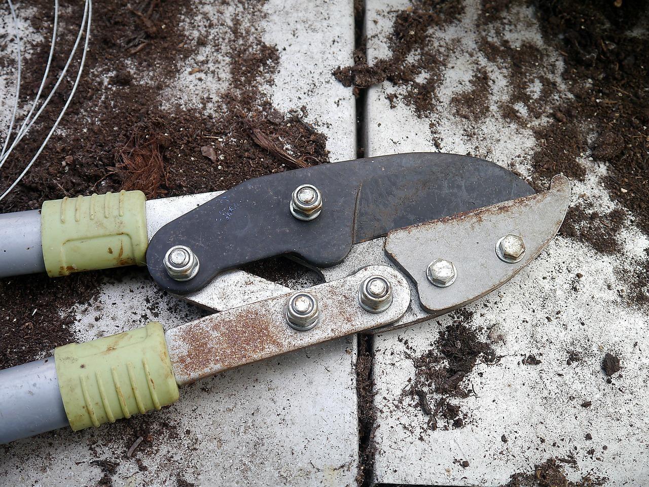 Beliebt Bevorzugt Stachelbeeren schneiden: Eine Anleitung zum Zurückschneiden @PK_38