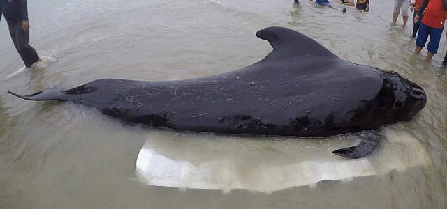 Plastik Plastiktüten Wal Thailand