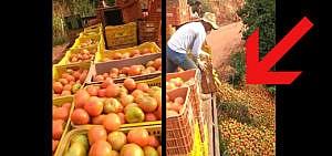 Äpfel Video Lebensmittelverschwendung