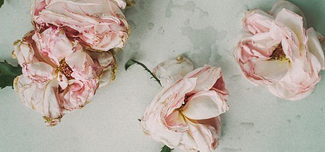 Blumen trocknen