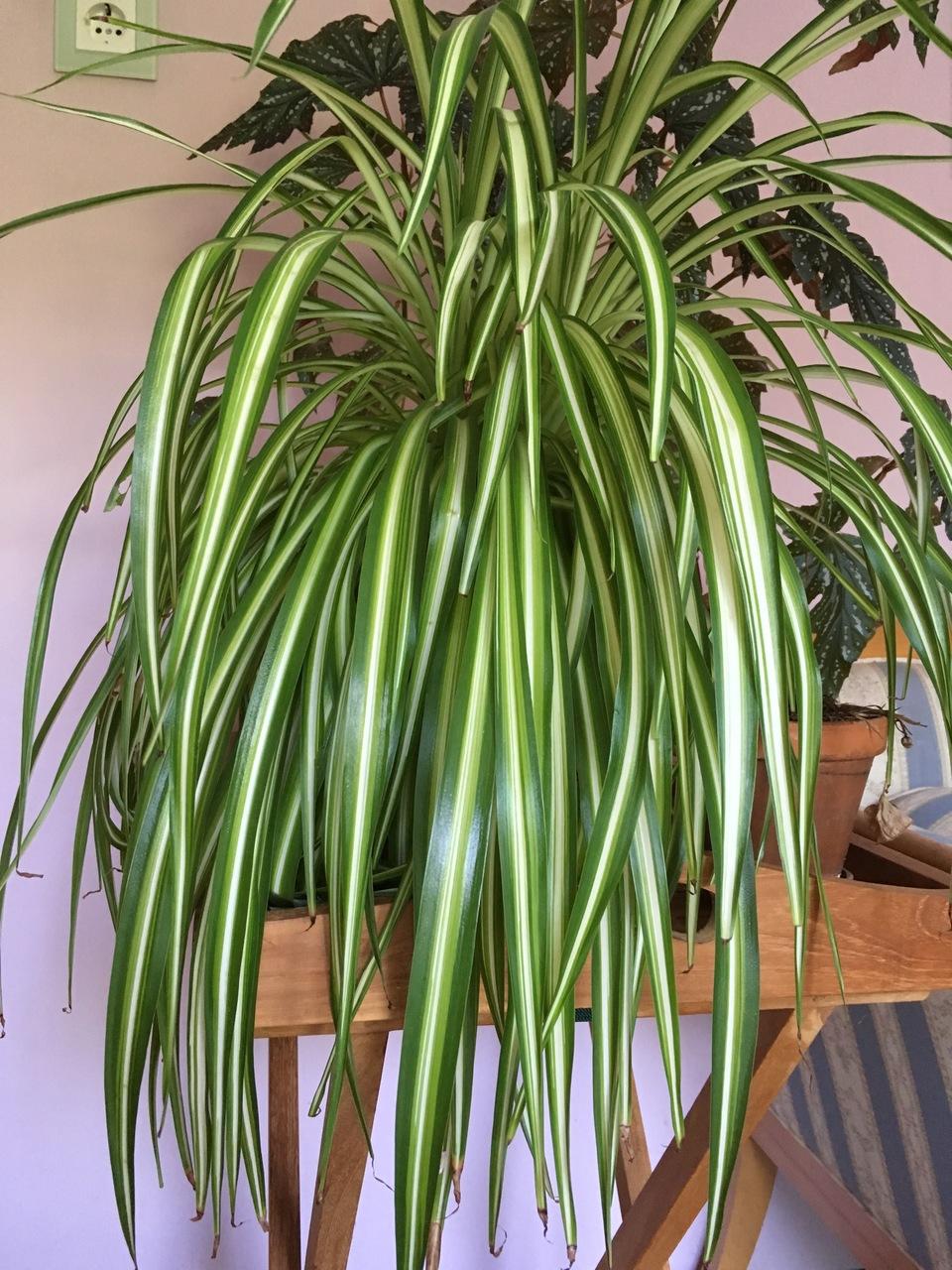 pflegeleichte zimmerpflanzen die auch ohne gr nen daumen wachsen. Black Bedroom Furniture Sets. Home Design Ideas