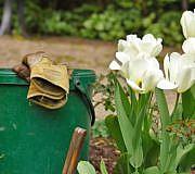 Garten Schädlinge weiße Fliege