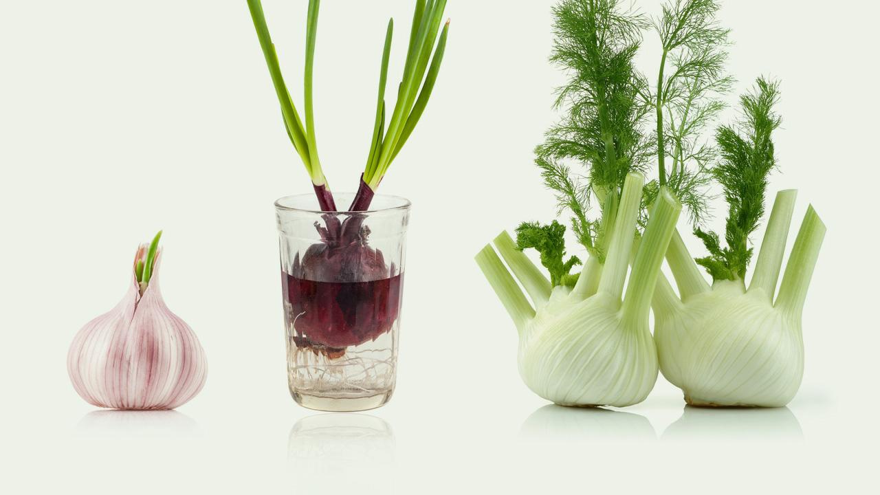 Gemüse Selber Ziehen 8 Lebensmittel Die Immer Wieder Nachwachsen