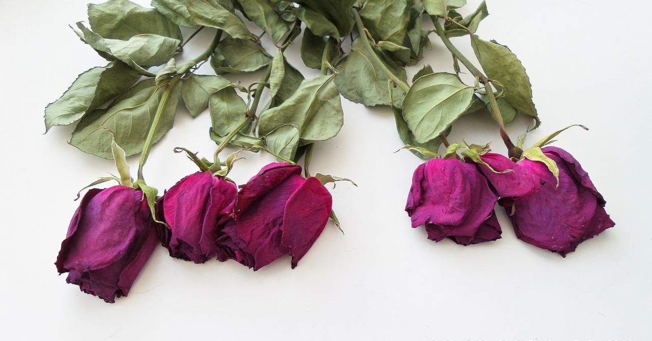 Beliebt Bevorzugt Blumen trocknen: Einfache Methoden für den Blumenstrauß oder @ER_56