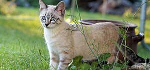 Katzen vertreiben Katze im Garten