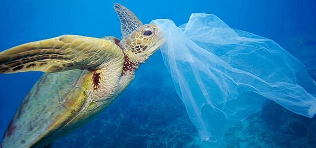 Mikroplastik im Mittelmeer