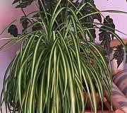 Pflegeleichte Zimmerpflanzen