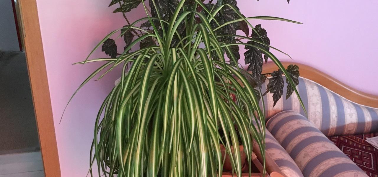 Pflegeleichte Zimmerpflanzen Die Auch Ohne Grunen Daumen Wachsen