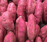 Süßkartoffeln pflanzen