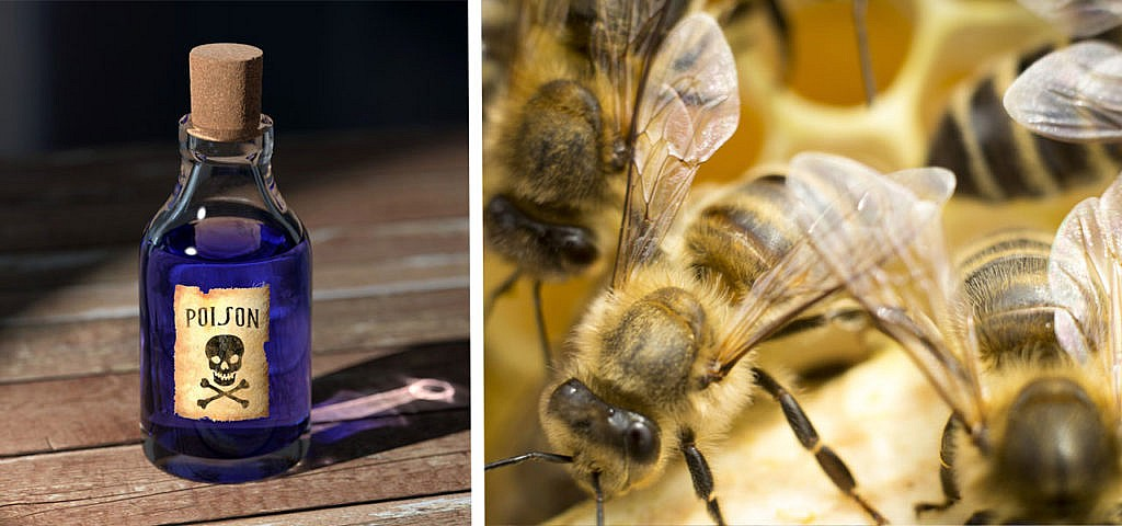 Bienen Insekten Pestizide Gift