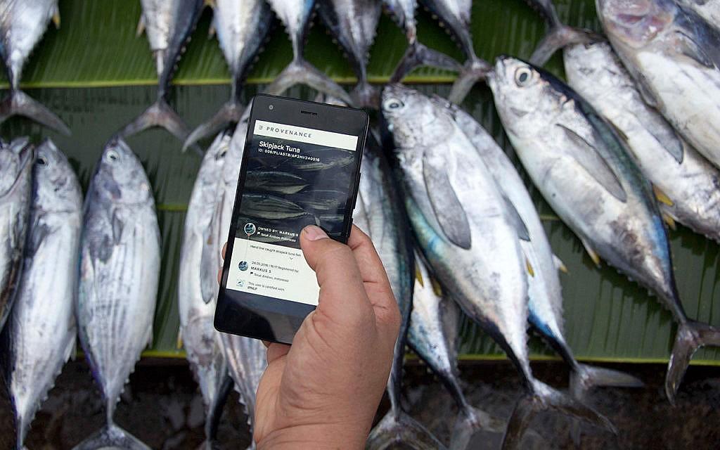 Blockchain-Systeme protokollieren alle Transaktionen, hier zum Beispiel der Handel mit Fisch