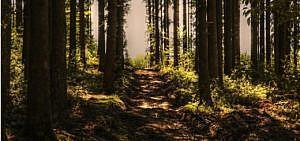 Der Weg durch den Wald zu weniger Stress