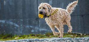 Hundekotbeutel sind bei der Gassirunde unverzichtbar.