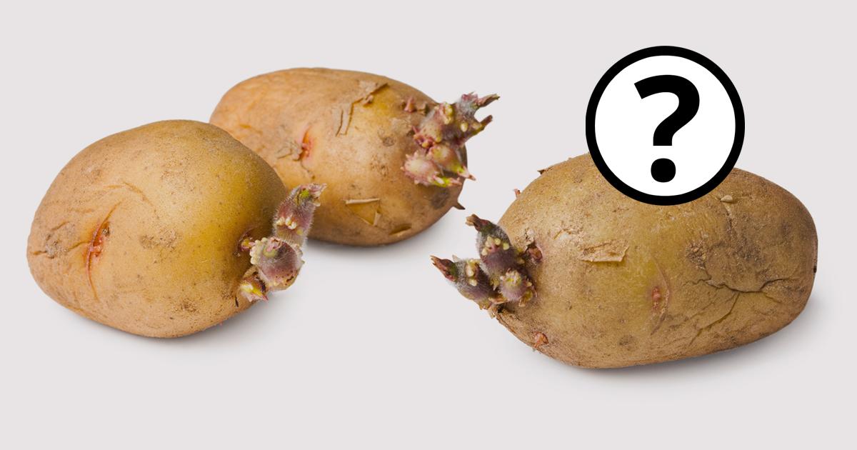 Kartoffel Giftig