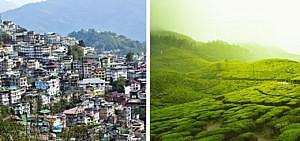 Indien Sikkim Bio Öko Landwirtschaft