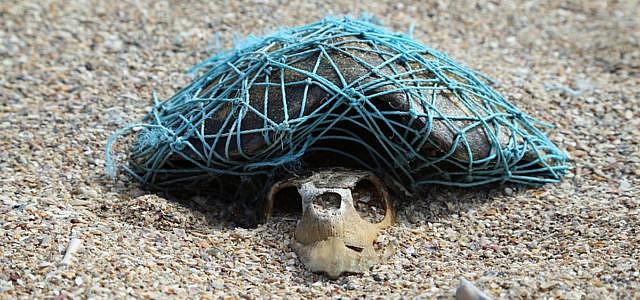 Schildkröte Geisternetz Fisch