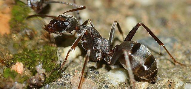 Ameisenbiss mit Hausmitteln lindern