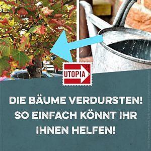 Die Bäume verdursten – so einfach könnt ihr ihnen helfen!