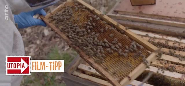 Bienen Imker