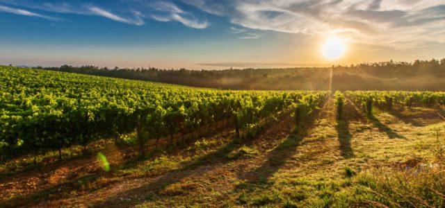 Bio Wein Toskana
