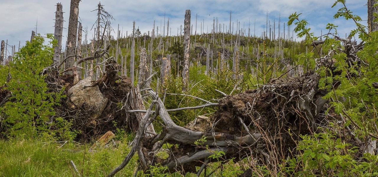 Gemeinsame Borkenkäfer: Erkennen, bekämpfen, Bäume retten - Utopia.de #MX_78