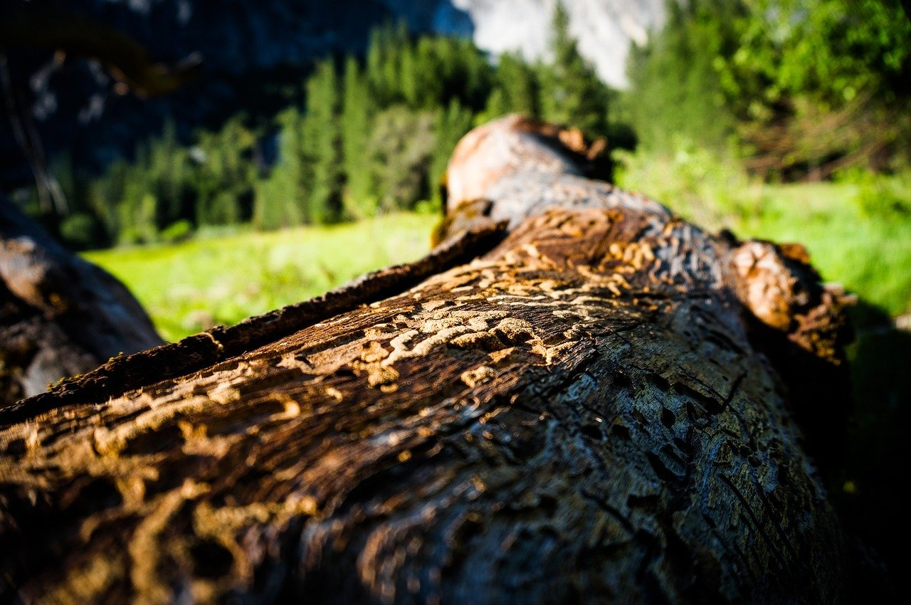 Etwas Neues genug Borkenkäfer: Erkennen, bekämpfen, Bäume retten - Utopia.de &DR_81