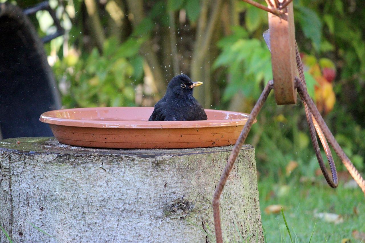 Vogeltränke und Vogelbad aufstellen: So bereitest du den Tieren eine ...
