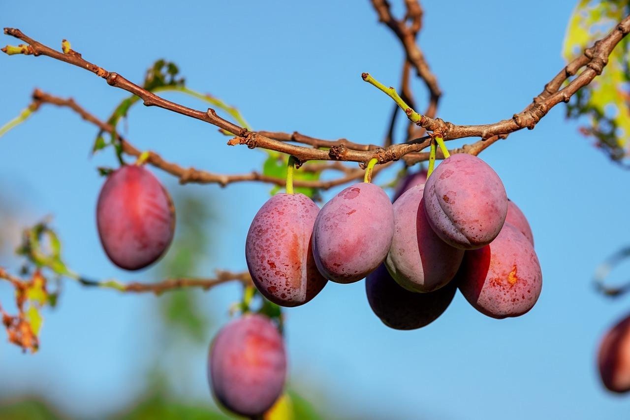 Früchte enthalten viele Vitamine und Antioxidantien.