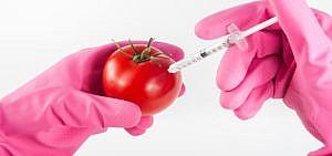 Gentechnisch veränderte Lebensmittel sind sehr umstritten