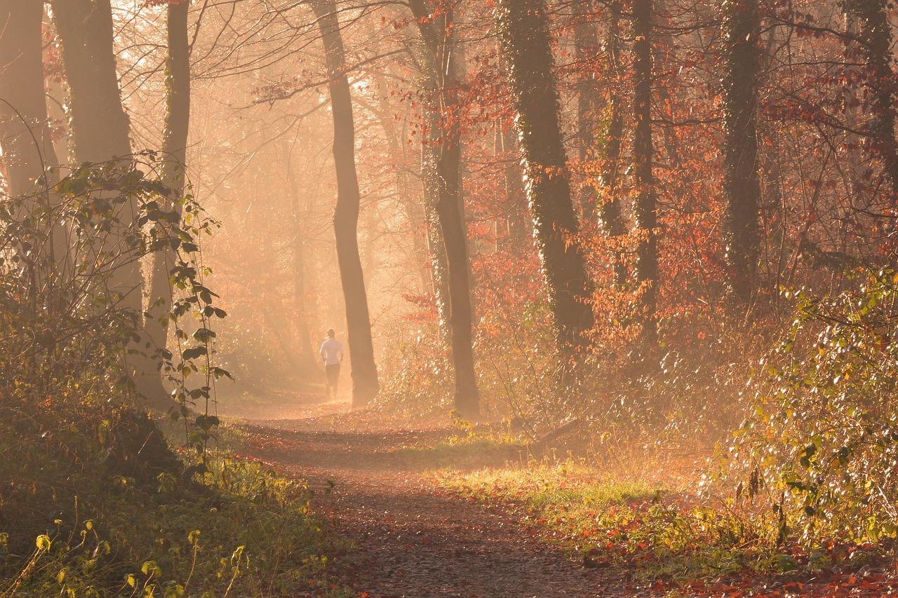 Nach einer Runde im Wald können wir oft klarer und kontrollierter denken.