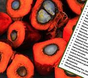 Palmöl Lebensmittel Kosmetik