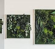 Pflanzenbilder Pflanzen Wände