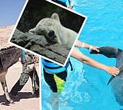 Touristenattraktion Tiere leiden