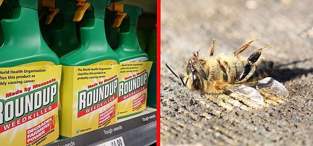 Glyphosat Bienen Studie
