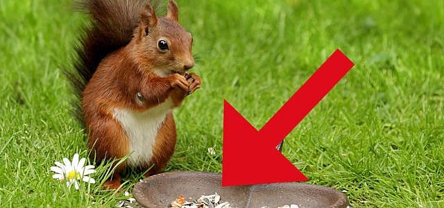 Eichhörnchen retten Nüsse