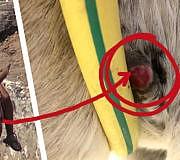 Esel Santorin Tierquälerei Tourismus