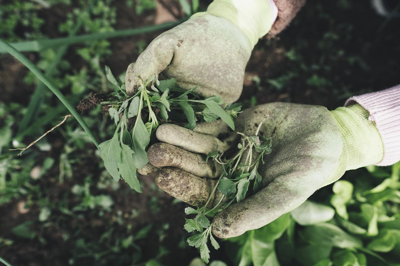 Handschuhe bei der Gartenarbeit schützen vor Schmutz und Bakterien.