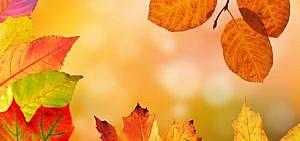 Herbstdeko basteln: 3 Ideen mit Naturmaterialien